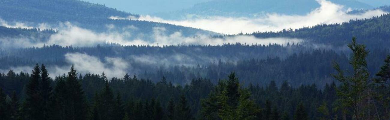 © Foto: Nationalparkverwaltung Bayerischer Wald